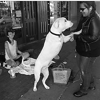 "Angel Balai (right) gives $5 to Caitlin Hamilton, age 24, and her dog Hanai, a three-legged Boxer, in Seattle, Wash.  Balai says ""I know what its like to be homeless.  I give like 5 bucks or 20, whatever I have with me. Its always nice to help out.""  She also gave them her leftover food which Hamilton gave entirely to Hanai."