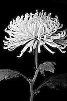 Closeup photo of a flower.