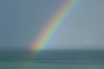 Rainbow and seagull, New Zealand