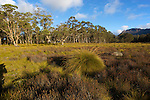 humid ecosystem of button grass nearby Pelion hut