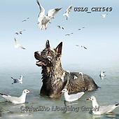 CHIARA,REALISTIC ANIMALS, REALISTISCHE TIERE, ANIMALES REALISTICOS, paintings+++++,USLGCHI549,#A#, EVERYDAY ,photos
