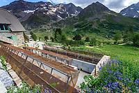France, Hautes-Alpes (05), Villar-d'Arène, jardin alpin du Lautaret, raised bed ou massif surélevé, reproduit les conditions de falaises et rocher,  permet aussi une vision à hauteur d'homme de plantes en coussinet