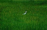 Environment wetland and bird Northern Australia