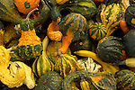 orange and green gourds