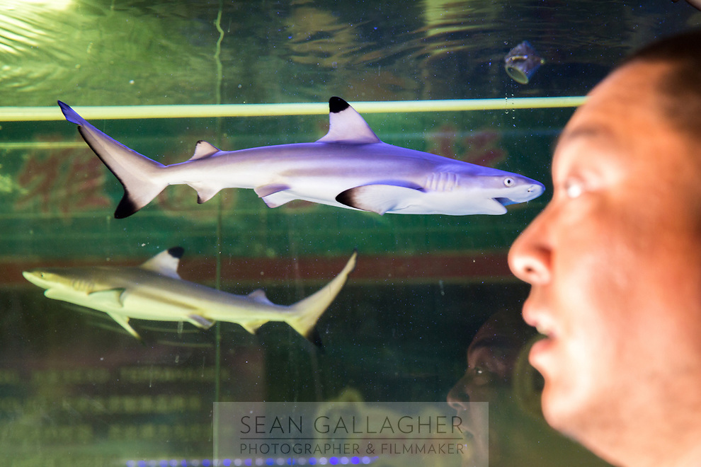 Jian Wei, 38, stands in front of a large tank containing Black Tip Reef Sharks (Carcharhinus melanopterus) in his shop at the Shilihe pet market in Beijing. He sells 3-5 individuals each month with each selling for approximately 4000RMB (US$600). The species is native to the coastal waters of the Info-Pacific region and is listed as 'near threatened' by the IUCN Red list due to overfishing. Jian orders his online from the Philippines and Indonesia with most being sent to China by air freight.
