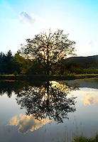 nature photography,nature photographers,risdon photography