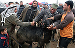 Palestinians gather around goats and sheep for sale at a market in preparation for the upcoming Eid al-Adha festival in Dahreiah village southern the West Bank city of Hebron Wednesday, Nov. 25, 2009. Muslims worldwide are preparing for the Eid al-Adha festival, with the sacrificial killing of sheep, goats, cows or camels. Photo by Najeh Hashlamoun