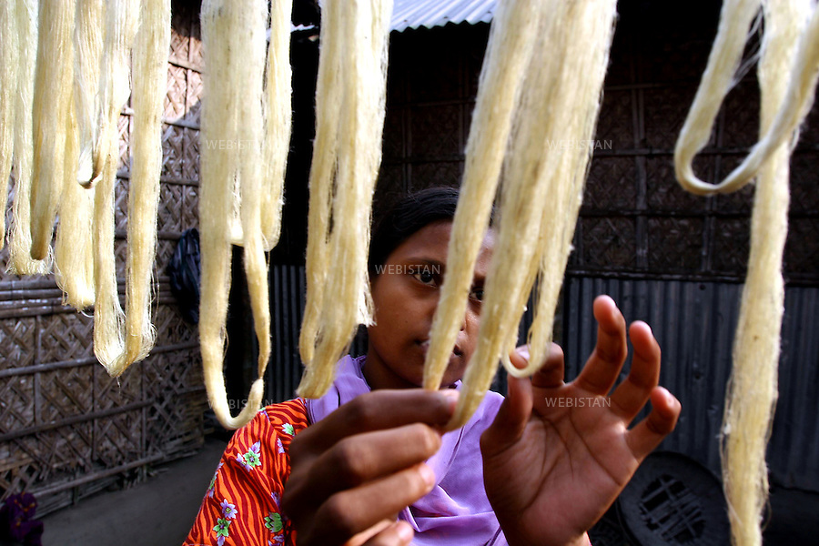 """Bangladesh. The fine silk thread that are spun from the cocoons are dried in bunches called """"lasi"""". .These will be ready for sale in a day..Bangladesh. Les fins fils de soie qui sont filés à partir des cocons sont séchés en paquets appelés """"lasi"""""""