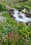 San Juan Mountains, CO<br /> Alpine stream banked by a mix of wildflowers in American Basin