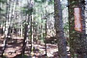 A freshly cut trail marker (blaze) in a softwood tree along Owl's Head Path in the Pemigewasset Wilderness of the New Hampshire White Mountains in November 20013. More than likely this is the work of a hiker because it's not a proper trail marker.
