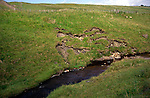 Erosion of river bank on small upland stream, headwaters of River Tyne south, England
