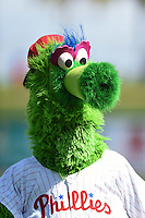 Philadelphia Phillies mascot, The Phillie Phanatic, entertains fans before an exhibition game against the University of Tampa on March 1, 2015 at Bright House Field in Clearwater, Florida.  University of Tampa defeated Philadelphia 6-2.  (Mike Janes/Four Seam Images)