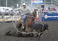 Tie Down Roping Pro Rodeo