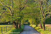 Sparks Lane, Cades Cove, Great Smoky Mountains National Park, Tennessee
