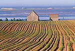 Farmlands, Prince Edward Island, Canada