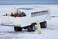 01874-11207 Polar bear (Ursus maritimus) near Tundra Buggy, Churchill, MB