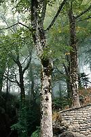 Italien, Toskana, Wald bei Kloster La Verna