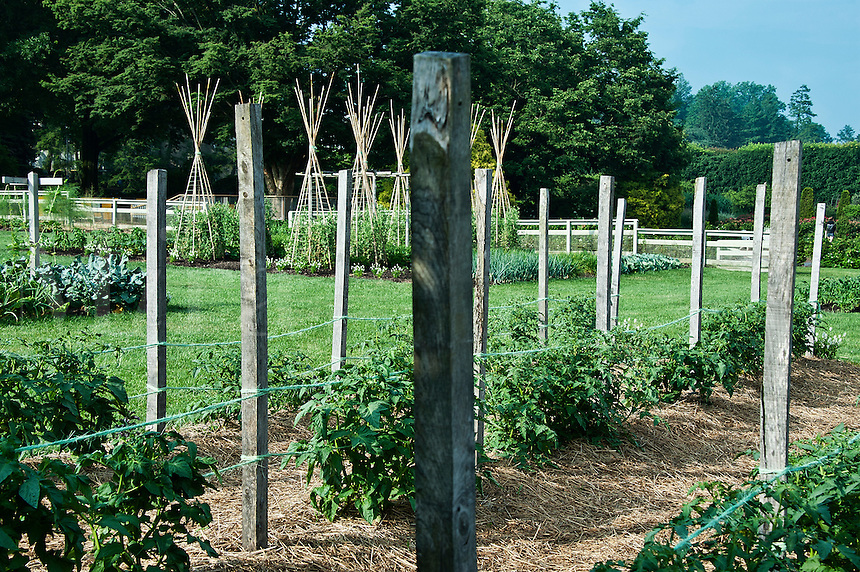 A well kept vegetable garden.