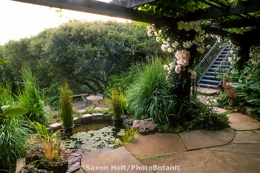 Patio with pond water feature on hillside garden above deck with California live oak tree (Quercus agrifolia)