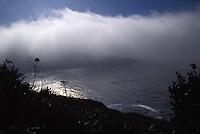 Fog rising off the bay in Mendocino, California