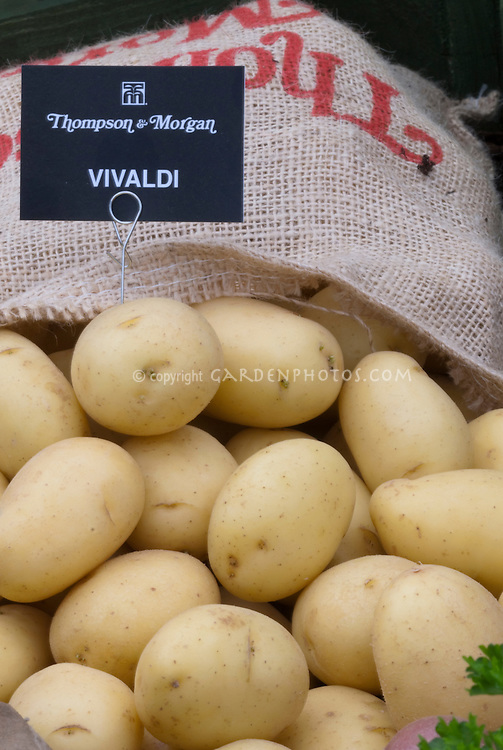 White potatoes Vivaldi in burlap bag from Thompson & Morgan and label sign