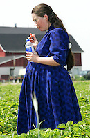 Cottam, Ontario - May 29, 2006 - A lady is seen eating a strawberry in the Raymonts farm field. Brad Raymont went to California to learn how to grow the berries in plastic so they are ready to pick up earlier than normal grown berries.