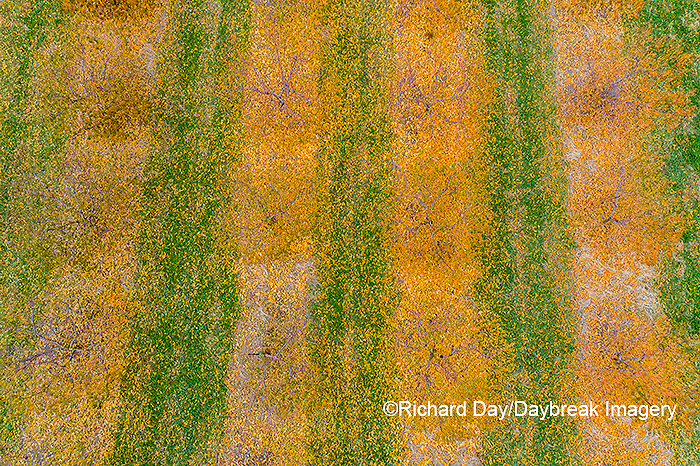 63801-12112 Peach orchard in fall-aerial  Marion Co. IL