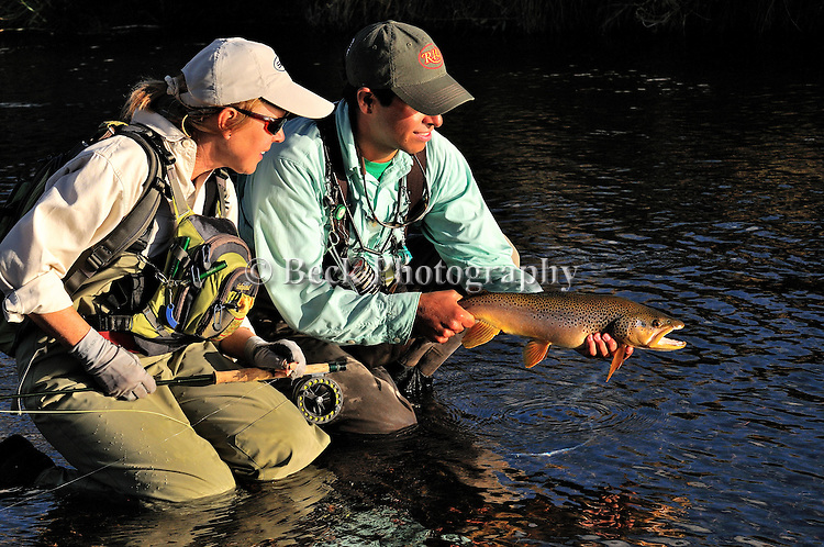 Brown trout 2010 release image