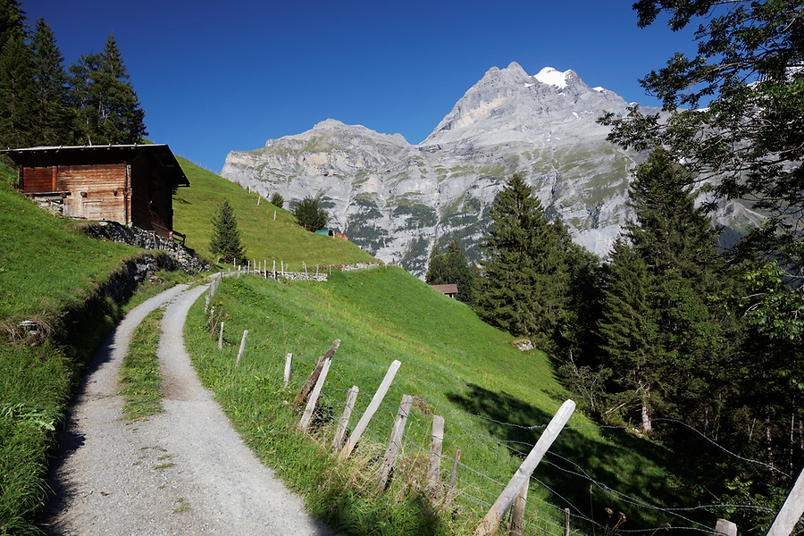Path through pastures near Swiss village of Gimmewald, Jungfrau in background, Switzerland