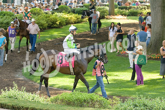 J W Blue before The Barbaro Stakes at Delaware Park on 7/9/11