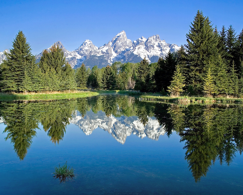 """GRAND REFLECTION"" -- The four highest peaks in the Grand Tetons with the highest, Grand Teton, in the middle all reflected in a beaver pond early in the morning. Grand Teton National Park, Wyoming, United States."
