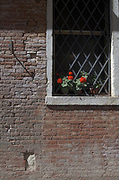 Geraniums poking through security grid on window sill, showing the brick work of a Ventian house on the canals,Venice, Italy.