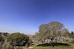 Israel, Lower Galilee, Hurvat Usha by Kiryat Ata Forest