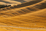 Textured golden fields in the fall in the Palouse valley