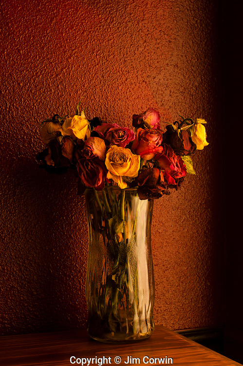 Multicolored roses wilting in glass vase with window warm window light