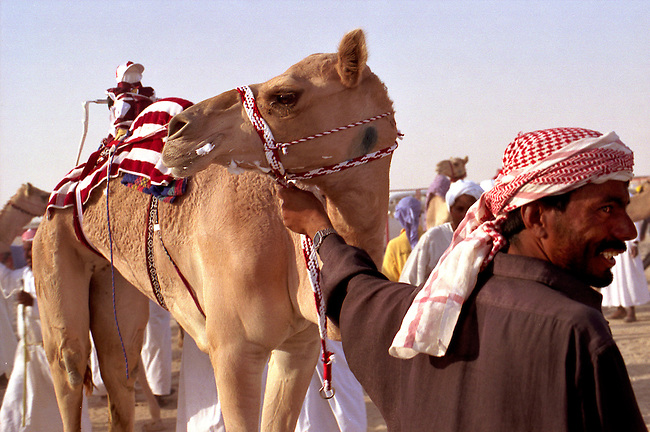 Qatar, ville de Al-Shahniya. Course de chameaux. *** State of Qatar, City of Al-Shahniya, the arrival of the Camel Race, a robot jockey on the camel, portrait of a stableman.