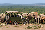 Tourists viewing elephants, Addo national park, South Africa