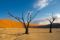 Sparse trees in the desert of Namibia.