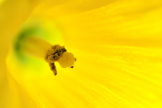 Macro shot of a yellow flower.