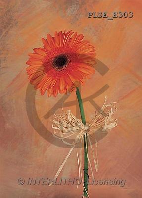 Jacek, FLOWERS, portrait, macro, photos, PLSE, PLSEE303,#F# Blumen, flores, retrato