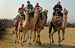 Palestinian Bedouins ride camels during a rally marking the 41st anniversary of Land Day, in Deir el-Balah, Central Gaza Strip, on March 31, 2017.  Land Day marks the killing of six Arab Israelis during 1976 demonstrations against Israeli confiscations of Arab land. Photo by Ashraf Amra