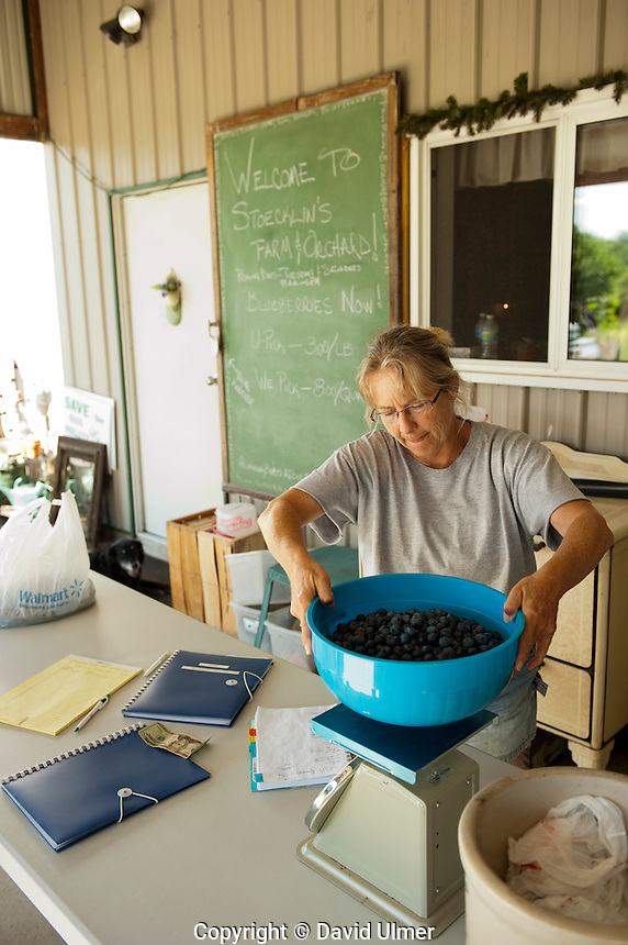 Weighing the blueberries for sale.