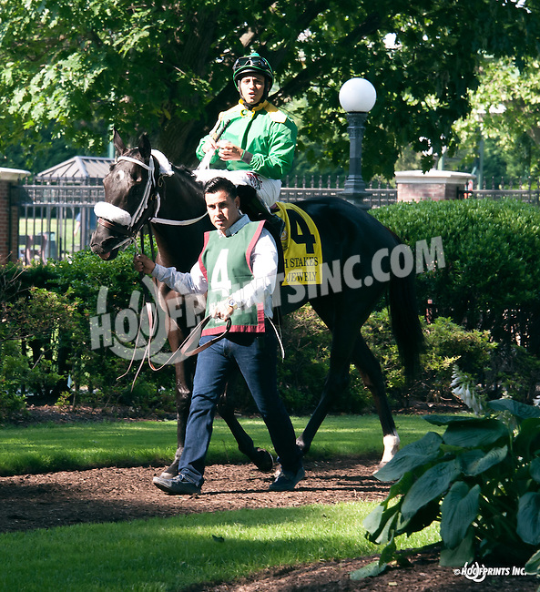Royal Jewely before The Obeah Stakes at Delaware Park on 6/11/16