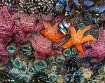Tidepool Detail, Point Reyes National Seashore, California, Marin County, California