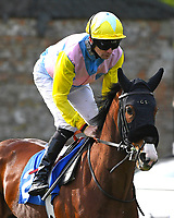 Mewtow ridden by Robert Havlin goes down to the start of The Penang Turf Club Malaysia Handicap (Class 5)   during Afternoon Racing at Salisbury Racecourse on 17th May 2018