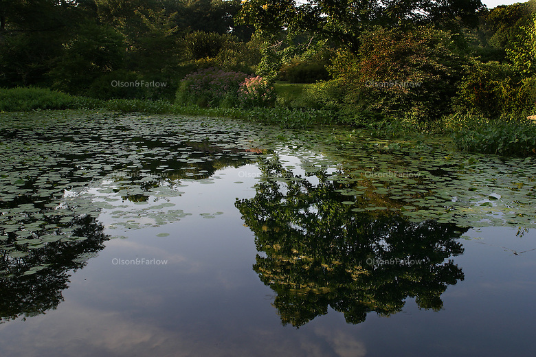 Reflections in a pond at the Arnold Arboretum in Boston.