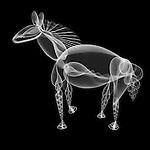 X-ray image of a horse (white on black) by Jim Wehtje, specialist in x-ray art and design images.
