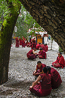 "Lhasa Tibet_Sera Monastery is one of the ""great three"" Gelug university monasteries of Tibet. The monastery was one of the finest locations in Tibet The Bylakuppe Monastery now houses 5,000 Buddhist monks comprising some migrants.<br />