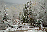 Idaho, North, Wallace.A dirt road travels among mixed trees and the first snows in late autumn.