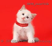 Xavier, ANIMALS, cats, photos, SPCHCATS710B,#A# Katzen, gatos